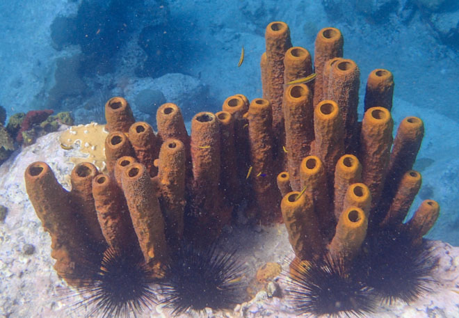 yellow tube sponges